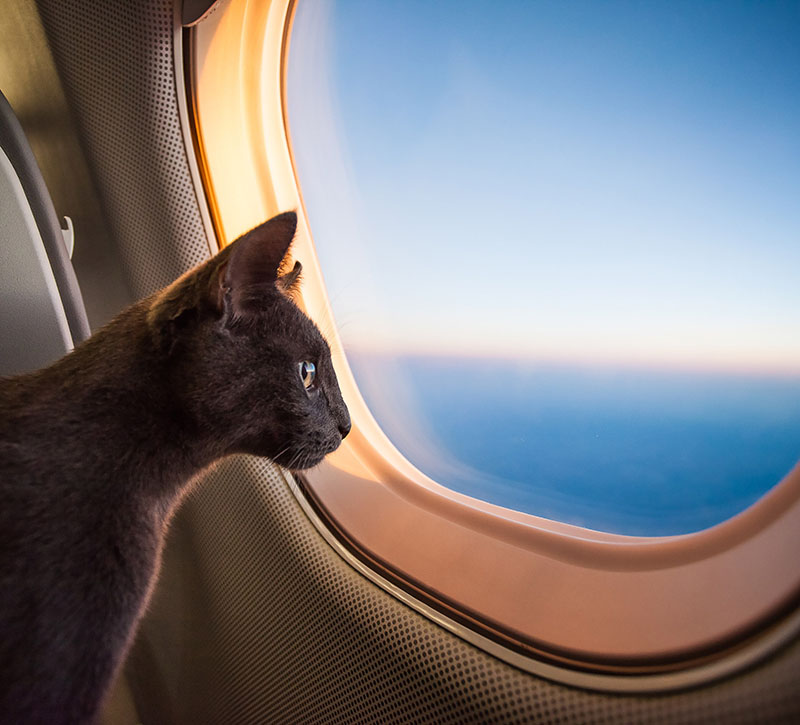 Did you know you can take dogs and cats into the cabin of the airplane? As long as they're small enough and their cage fits under the seat, they're fine to fly with you.