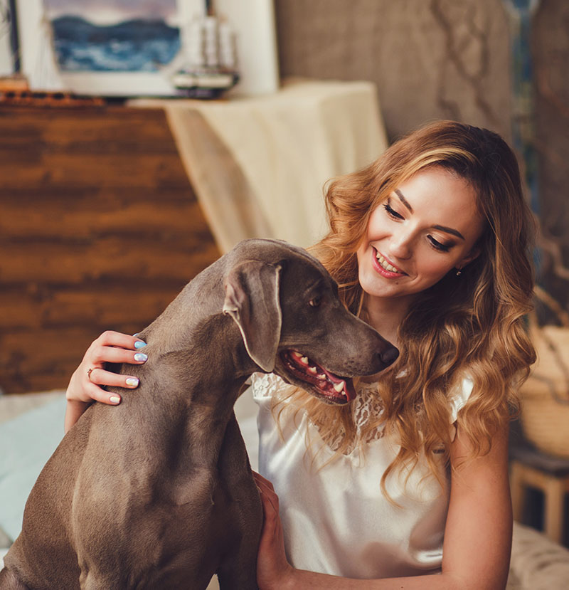 There's nothing better than getting home after a long day and your pet being there to greet you with a big cuddle and a sloppy kiss. You don't have to be deprived of snuggles while you're on holiday, just take your furry friend with you.