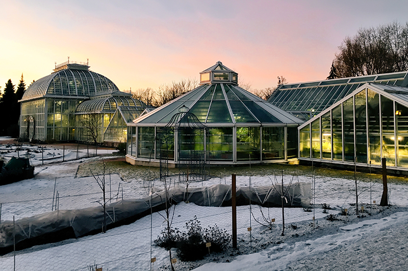 Kaisaniemi Botanic Garden takes on a totally different look in its mantle of snow, but it is just as magical in the winter light as the summer.