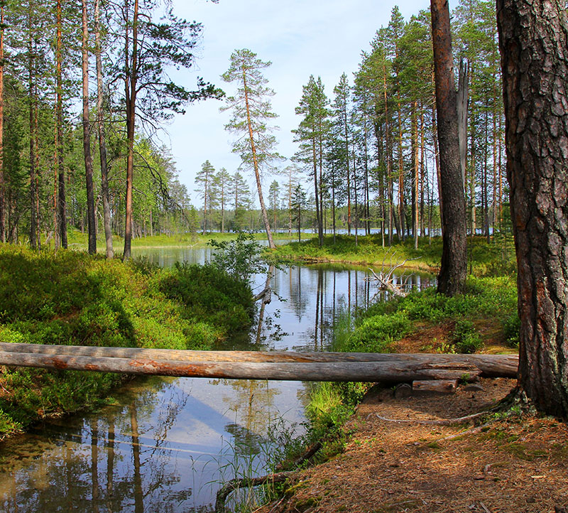 Hossa National Park is one of Finland's many beautiful national parks that offers great opportunities to have a day out with your furry pal. There are so many different hiking and biking routes that you can take, as well as lakes where you can find a good spot for lunch.