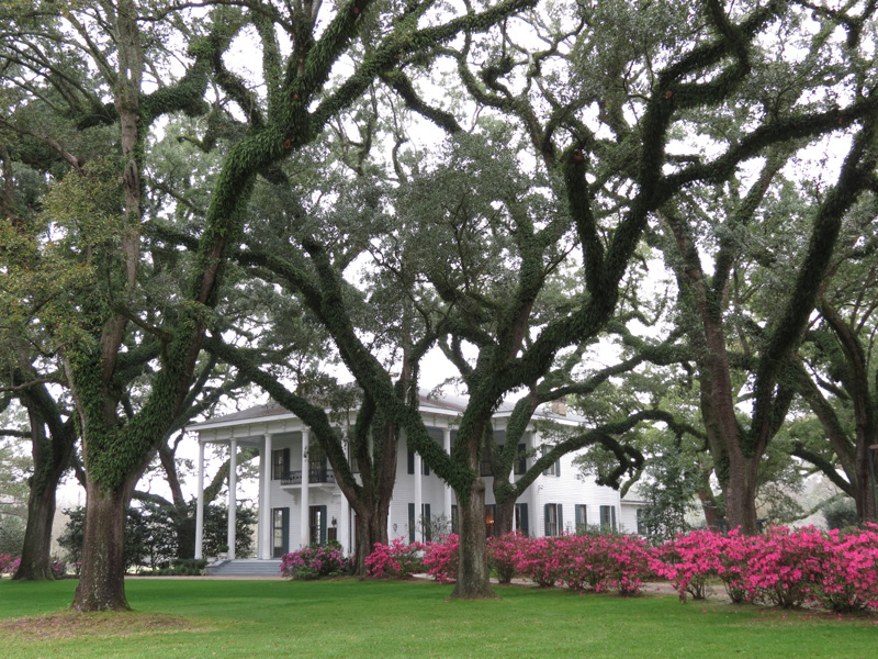Bragg–Mitchell Mansion is one of the most photographed attractions in Mobile. Its beautiful gardens are fantastic to take a walk around, admiring the pretty plants.