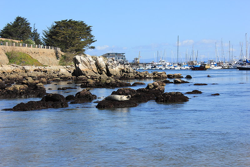 If you want a break from the car, Monterey is perfect for getting active.