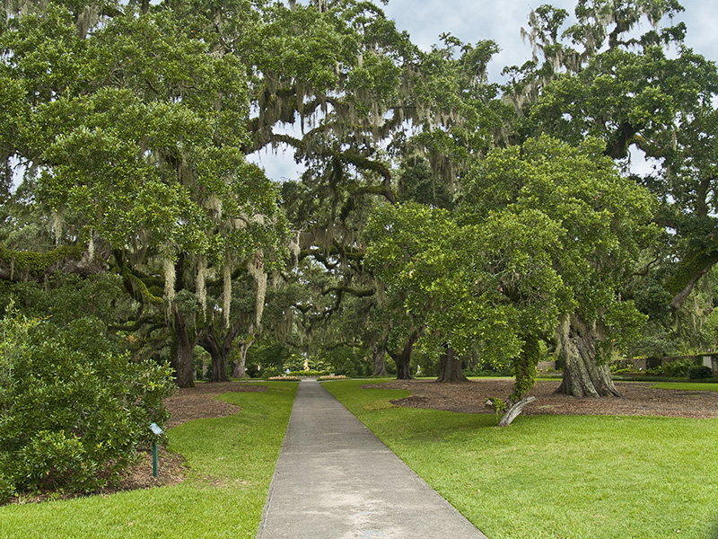 Beautiful  nature meets blissful beach in the oceanfront forests of the Myrtle Beach area.
