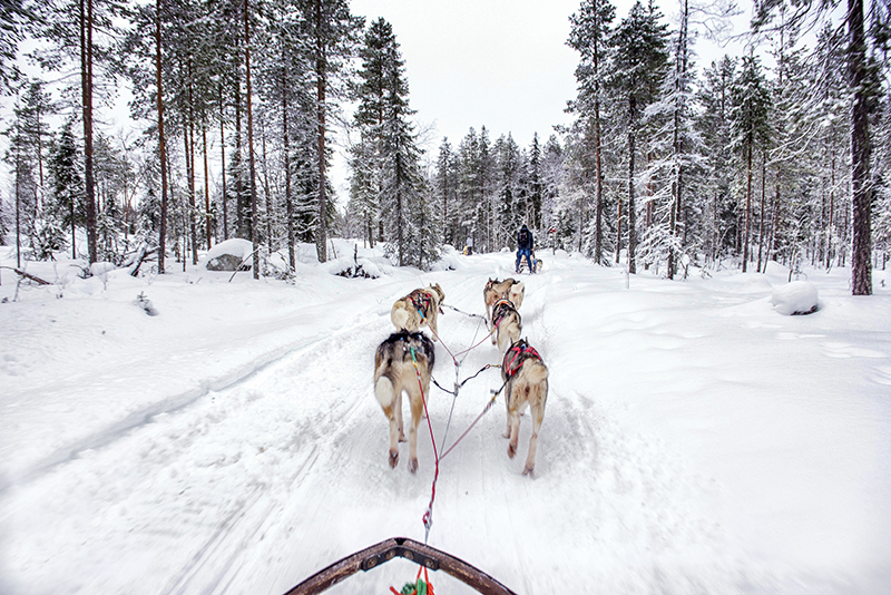 This snowy haven is perfect for lots of other winter activities and what's not to love about combining this beautiful landscape with these gorgeous husky dogs in a dog-sledding trip through Sweden's winter wonderland.
