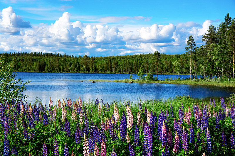 Sweden is a delightful year-round destination. For those who love the outdoor life, but don't want to explore on skis, then summertime is ideal for pulling on your walking boots or getting on a bicycle to lose yourself in this picture-perfect countryside.