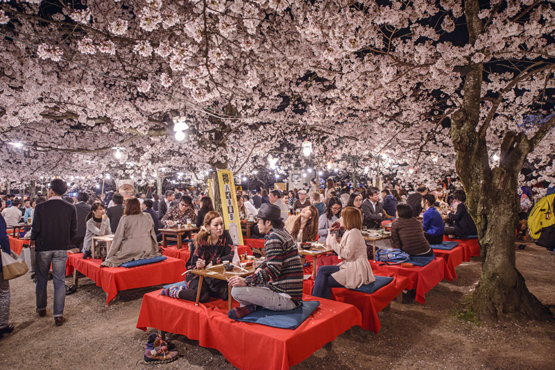 Celebrations in and under the cherry blossom trees in Japan are a unique experience for any holidaymaker.
