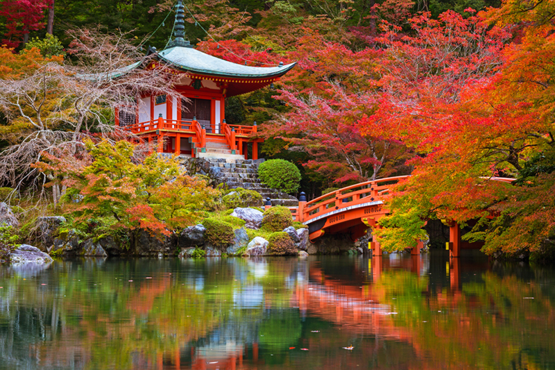 Kyoto is said to be one of Japan's most colourful destinations, and that is certainly true of the area in autumn. The many temples and shrines are seen to be at their prettiest when dressed with the blazing reds of the autumn foliage.