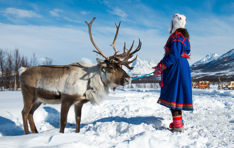 The reindeer are tended by the Sámi, the indigenous people who live in the area that is now divided between Norway, Finland, Sweden and Russia.