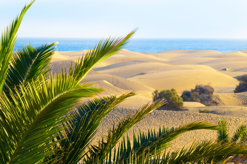 The Dunes of Maspalomas ripple down to the sparkling Atlantic Ocean, making them a pretty spectacular sight. Opt for a camel ride across them before hitting the beach and making a day of it.