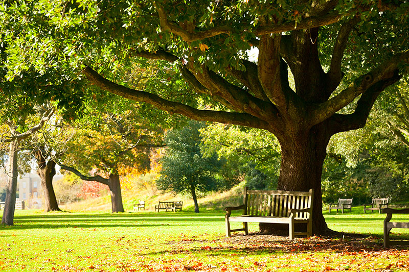 Communal gardens often have seating in shaded areas where you can take a moment to cool off.