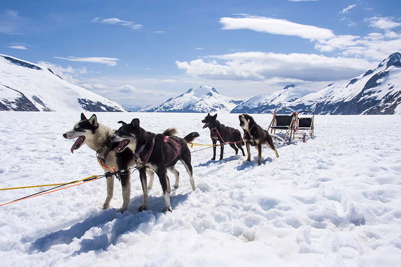 A husky-led sledge ride is guaranteed to be an unforgettable experience.