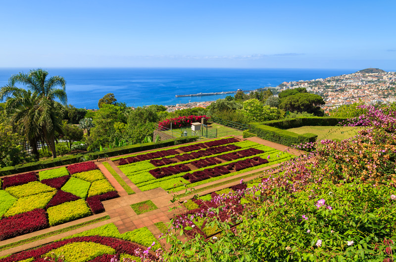 Known as 'The Floating Garden' thanks to its abundance of flowers, there are plenty of gardens you can wander around to enjoy the blooms. Madeira Botanical Garden featuring over 2,000 plants is a great place to start!