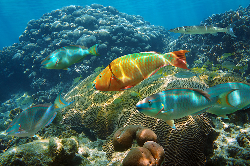 Cozumel has some thriving marine life. Try scuba diving - it is the best way to experience this fascinating underwater world.