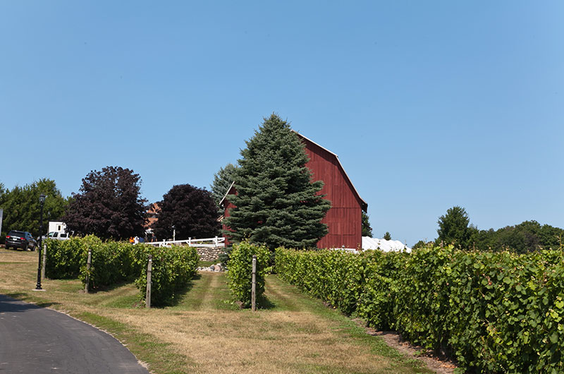 The Leelanau Peninsula Wine Trail is divided into three loops for easy touring. You can enjoy award-winning wines at more than two dozen wineries on this trail, which is worth the walk and drive in itself for the wonderful landscape it will take you through.