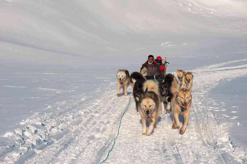 The most fun snowy activity has to be a husky ride.