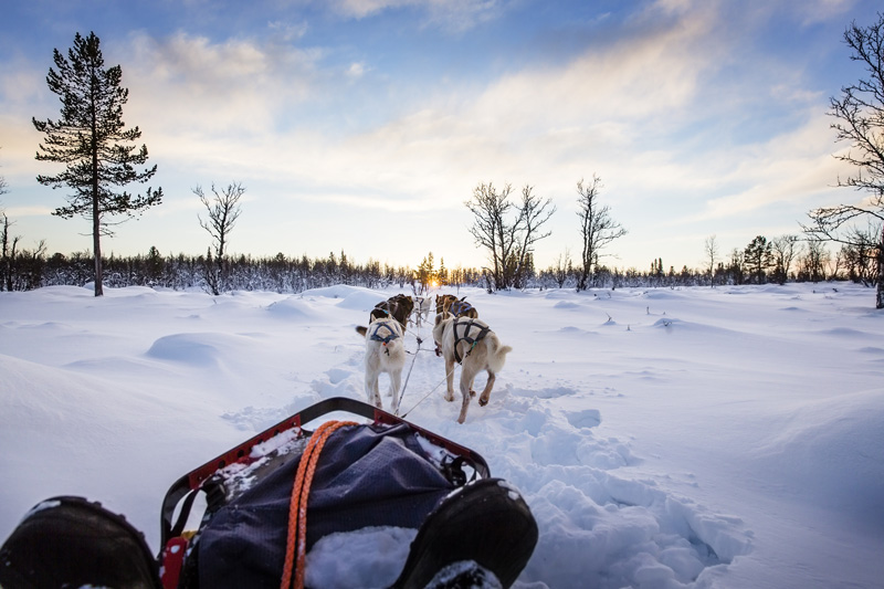 Even more fun than a husky ride, is getting to be a musher in control of your own team of dogs.
