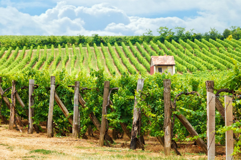 Hungary's countryside is filled with beautiful vineyards, many offering wine tasting tours. Try and visit some while you are on holiday here and taste some of the local produce.