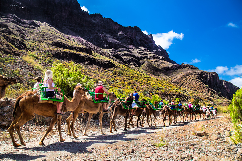 A trip to Gran Canaria wouldn't be complete without a camel ride! There are plenty of opportunities to ride, but make sure the sand dunes are part of your experience - they really are a beautiful sight.