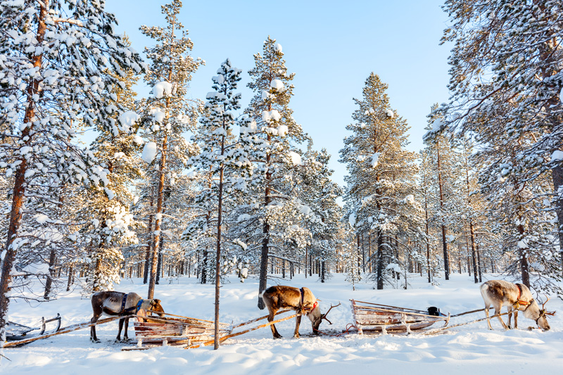 The will be plenty of reindeer around in Finland, but at Santa Claus Village, you can meet Rudolph and co too.