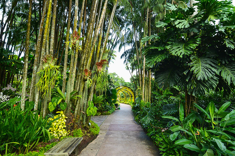 Tropical gardens are often found in our holiday hot spots, not only are they very different from our own, but the large fronds and leaves provide a shady retreat on a hot day.