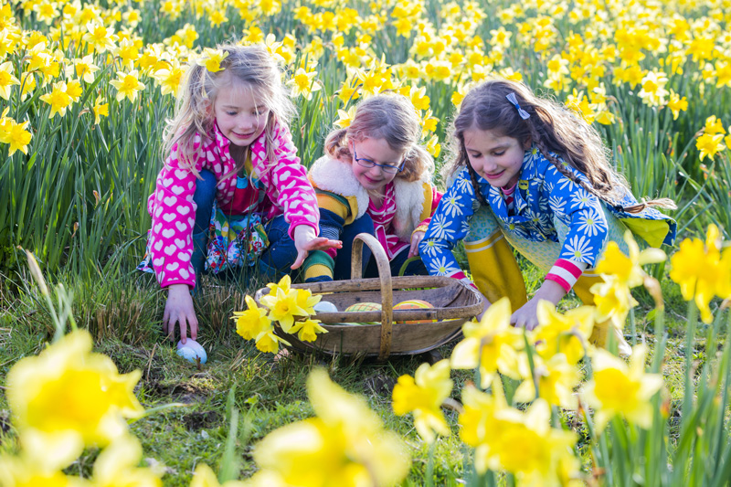 Organise an Easter Egg hunt for the children and watch the delight in their faces as they discover an egg.