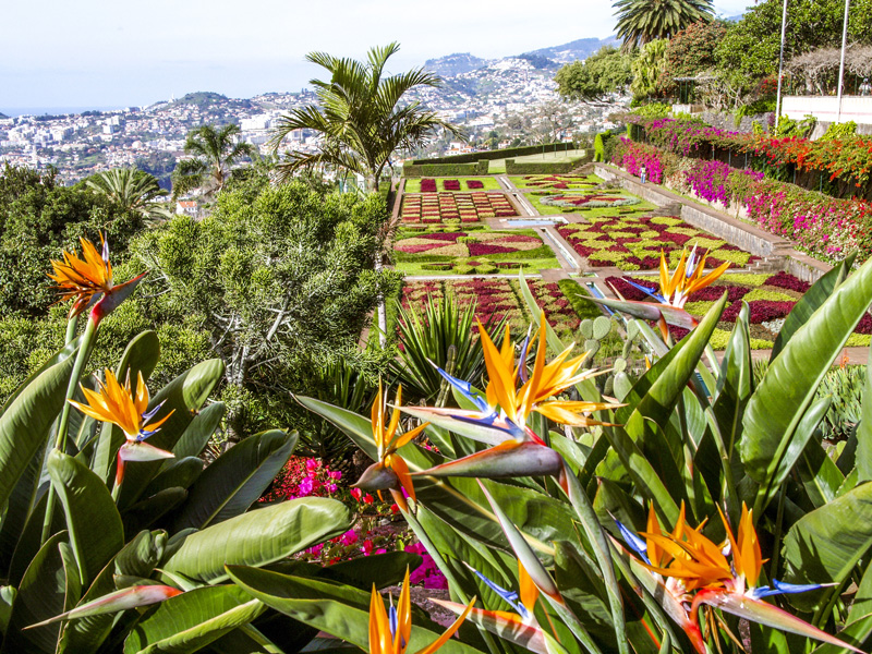 Keep out of the hot sun by exploring one of Madeira's many gardens. You will see birds of paradise, begonias and magnolias, among hundreds of others.