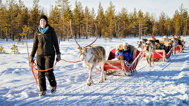 If the wilderness beckons for the whole day, a snow safari by reindeer sleigh or snowmobile takes you deep into the forest.