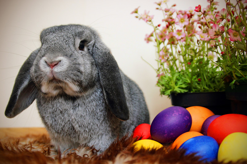 Look out for the Easter Bunny delivering lots of yummy chocolate eggs for Easter.