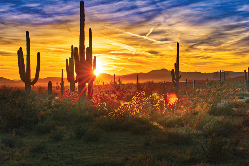 Arizona is full of fantastic spas. After a morning in the scorching sun, head to a spa and hydrate your skin with a fantastic treatment to enjoy the best of both worlds.