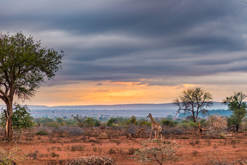 The instantly reconisable plains of South Africa are so evocative of a land very differnt from any other. Many South African resorts signed up to RCI's holiday exchange programme are located on the borders of the country's magnificent national parks.