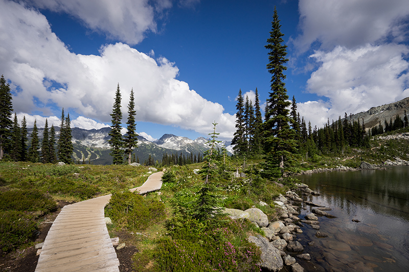 Many walkers come to Whistler purely to experience the High Note Trail, as it is one of the best hiking routes in the region.