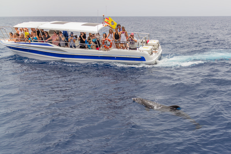 Enjoy a dolphin- and whale-watching boat trip where the beautiful creatures dance around the boat, showing off and inviting you to reach for your camera. Don't forget to be still and quiet as they surface next to your boat, and simply listen to them breathing - it will bring tears to your eyes, it is such a beautiful experience.