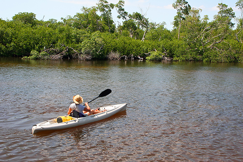 The J.N. 'Ding' Darling National Wildlife Refuge consists of over 6,400 acres of mangrove forest, submerged seagrass beds, cordgrass marshes, and West Indian hardwood hammocks. It's also home to over 245 species of bird.