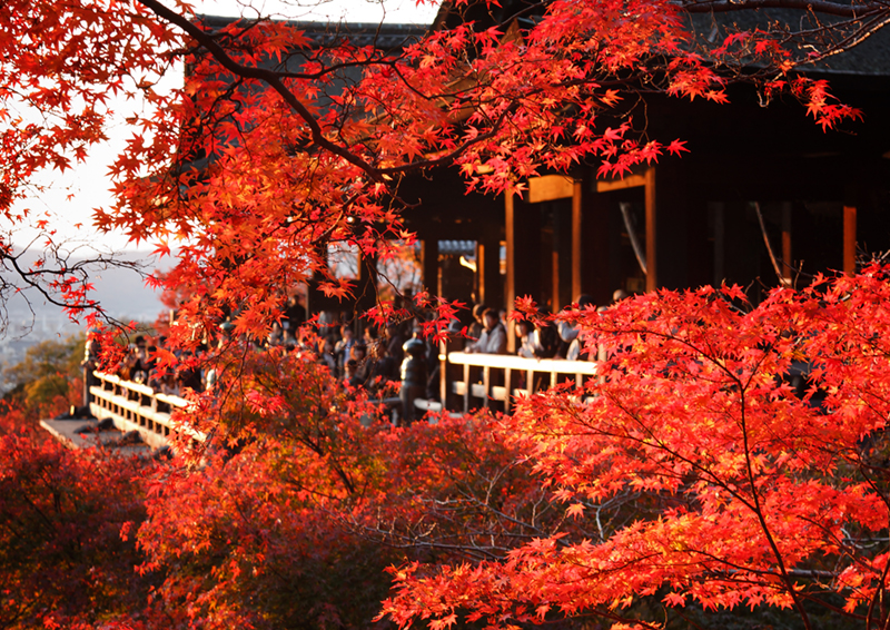 Japan is famed for its pink springs, when cherry blossom paints its streets. However, it is just as dazzling in the autumn as trees everywhere turn red, as in this Kyoto landscape.