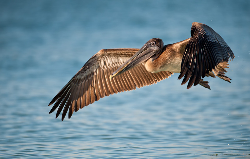 A trip to Mobile Bay for an ecotour meant Donna got to see some incredible wildlife in their natural habitat, including a brown pelican. What a sight!