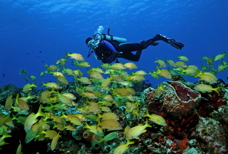 Swim alongside some of the most colourful fish at the Cozumel Reefs off the coast of Mexico.
