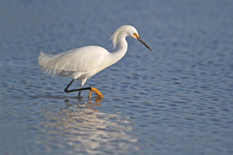 Over 400 species of bird have been spotted at Bon Secour, including beautiful snowy egrets, so bird spotters must remember to bring their binoculars.
