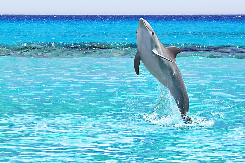 Visit Dolphin Discovery to view a dolphinarium with a world-renowned breeding programme. Why not take a swim with these beautiful creatures, it will be an experience you will never forget.