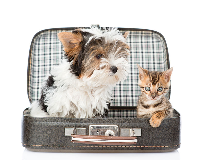 If your dog or cat has ever climbed into your suitcase as you're packing it and made you feel guilty for leaving them behind, get them a pet passport and take them with you.