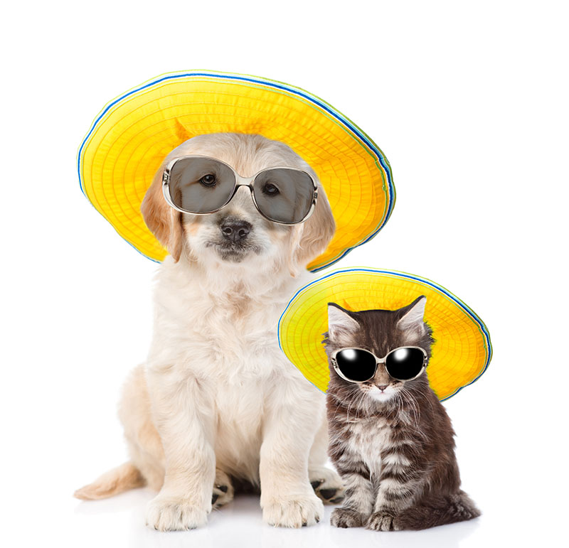 Putting your dog or cat in a pair of sunglasses and a hat might not be the most fun for them, but taking them on holiday will be great!