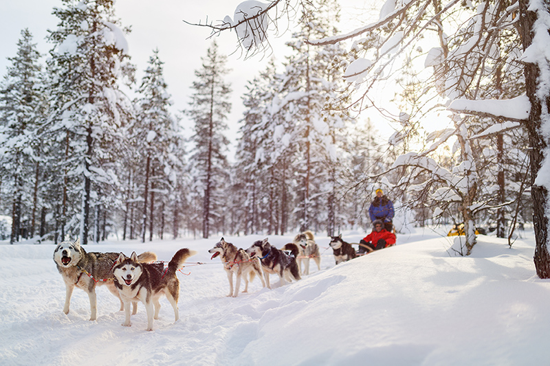 Why not experience the snow in thrilling style by whooshing along in a husky-drawn sled in Lapland?